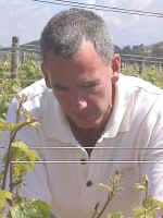 Viticulturist, Larry Morgan, inspecting the Gamay Noir