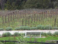 The Castle vineyard