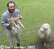Neil with new born lambs