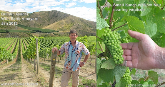 Left: Quintin Quider at Wild Earth Vineyard looking north. Right: Pinot Noir before veraison P